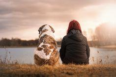 Curiosidades sobre cães