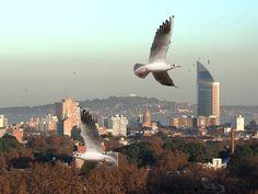 Preciosa fotografía del Cerro de Montevideo y Torre de Antel.