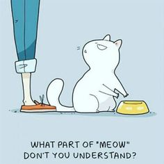 New Ideas cats cartoon illustration gatos I Love Cats, Crazy Cats, Cute Cats, Funny Cats, Funny Animals, Cats Humor, Animals Images, Catsu The Cat, Cat Comics
