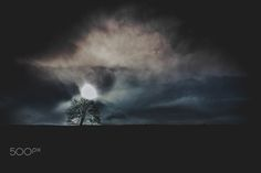 The Tree - null Celestial, Outdoor, Animal Photography, Animales, Outdoors, Outdoor Games, The Great Outdoors