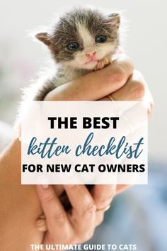 This kitten checklist was so helpful for my husband and I. We are suprising our children with a kitten for christmas and there are so many kitten essentials we are worried about forgetting! Funny Cat Faces, Funny Cat Photos, Funny Cats And Dogs, Funny Cat Videos, Cats And Kittens, Cat Breeds List, Large Cat Breeds, Funny Cat Wallpaper, First Time Cat Owner