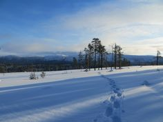 On snowshoes no tracks are needed, make your own paths and enjoy the freedom!
