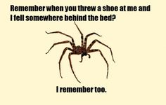 Remember when you threw a shoe at me and I fell somewhere behind the bed..?