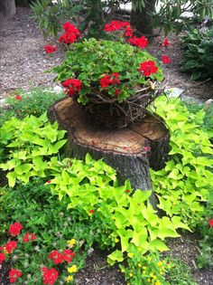 Pretty way to make use and hide a tree stump. #landscaping #plants