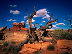 A Dead Branch in Canyonland National Park