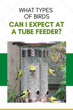When you place tube feeder in your backyard, you can expect to find small flying visitors like pretty songbirds. The tube feeder is not suited for blackbirds, which are usually unwanted by most birders. This type of feeder comes in a variety of styles and with a number of features that are very likely to attract some beautiful birds to your backyard or garden. You are sure to enjoy your yard landscape even more when you incorporate a tube feeder!