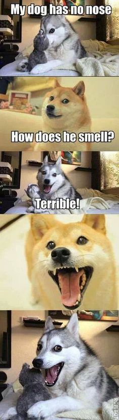 Funny pictures about Wow. Such funny. Oh, and cool pics about Wow. Such funny. Such funny. Dog Jokes, Corny Jokes, Funny Animal Jokes, Cute Funny Animals, Stupid Funny Memes, Funny Animal Pictures, Funny Relatable Memes, Animal Memes, Cute Dogs
