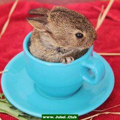 Milch oder Zucker zum Kaninchen?
