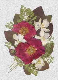 Pressed Red Roses and Larkspur on Handmade Paper