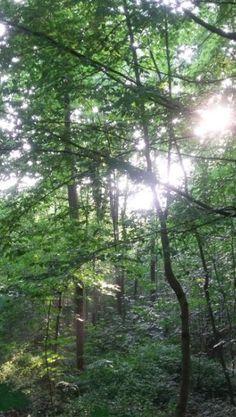 Waldlicht, Foto: S. Hopp