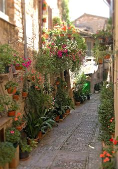 Italian Alley Garden...Why didn't I think of this? LOVELY!
