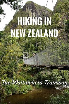 The Waitawheta Tramway is an easy hike in New Zealand's Kaimai Ranges. The kauri logging history and beautiful river scenery makes for a delightful walk!