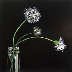 Dandelion VII -- L C Neill