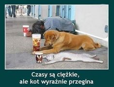 How to earn money. lol Check out this funny cat. Animals And Pets, Funny Animals, Cute Animals, Lol, Video Humour, Funny Statuses, Funny Cats And Dogs, Videos Funny, Really Funny