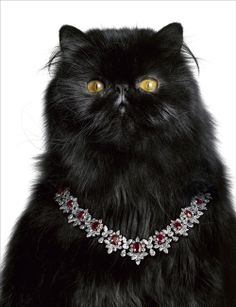 But what else would you expect from Harry Winston? Harry Winston advertsing campaign, photographed by Laziz Hamani. Harry Winston, Crazy Cat Lady, Crazy Cats, Bling Bling, Photo Chat, Diamond Are A Girls Best Friend, Cats And Kittens, Cat Lovers, Jewelery