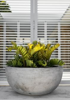The Essential Carlton Bowl is a large low bowl perfect for using singularly within a composition, or just as a feature by itself . Outdoor Planters, Outdoor Landscaping, Garden Planters, Succulents Garden, Outdoor Gardens, Landscaping Plants, Large Garden Pots, Cactus, Large Plants