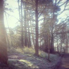 un matin dans les bois ... et ben il faisait froid !!! :)