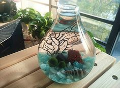 NewDreamWorld's Fashion Aquarium Kits-Living Moss Ball, Sea Fan, Amazonite Gravel, Cone Seashell, Red Volcano Rock, Work Desk Decoration