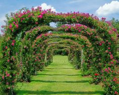 Rose Arch At Elizabeth Park West Hartford CT By JoeParskeyGallery. Using A  Variety Of Layered