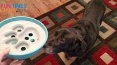 This interactive dog food bowl serves 2 purposes: 1) it's a slow feed dog bowl 2) it's a treat-dispensing dog toy. A review of the PAW5 Rock & Bowl for dogs