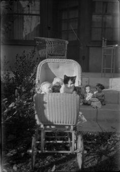 Cat and Dolls in a Pram by ChrisWarren1956, via Flickr
