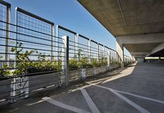 These plants will cover to create natural visual screen for the garage