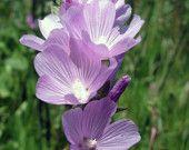 Stalk of violet flowers Flowers, Summer, Plants, Etsy, Summer Time, Plant, Royal Icing Flowers, Flower, Florals