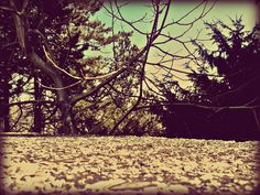#nature #park #mobilephoto