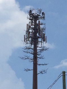 A badly done fake tree cell tower.  Note the lack of branches and the thinness of each branch. Cell Site, Fake Trees, Ham Radio, Towers, Branches, Oc, History, Design, Ants