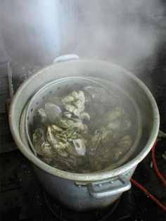 Oyster Roast - Charleston South Carolina SC