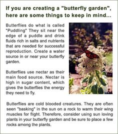 Butterfly Garden List For WI | Butterflies/caterpillars/cocoons/ BUGS |  Pinterest | Gardens, Butterflies And Insects