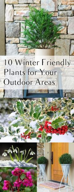 10 Winter Friendly Plants for Your Outdoor Areas 10 outdoor plants that thrive in the winter. The post 10 Winter Friendly Plants for Your Outdoor Areas appeared first on Outdoor Ideas. Outside Plants, Outdoor Plants, Outdoor Areas, Outdoor Flowers, Garden Shrubs, Garden Landscaping, Garden Plants, Landscaping Supplies, Landscaping Ideas