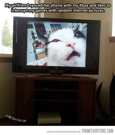 lol the kitty's face is hilareous, I have to figure out how to do this with Russell!!