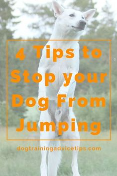 4 Tips to Stop your Dog From Jumping   Dog Training Tips   Dog Obedience Training   Dog Training Commands   http://www.dogtrainingadvicetips.com/4-tips-stop-dog-jumping