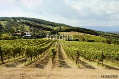 """Scarica l'immagine Royalty Free  """"Holiday in the countryside on the hills…"""