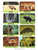 This is a free preschool bible lesson on God made the animals. God made amazing Australian animals! Children will learn all about the amazing creatures of Australia and how God has made all creatures. Preschool Bible Lessons, Preschool Art Projects, Early Childhood Activities, Childhood Education, Year 1 Classroom, Animal Activities, Australian Animals, Animal Crackers, Thinking Day