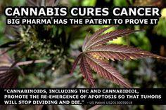 US Government's medical marijuana patent