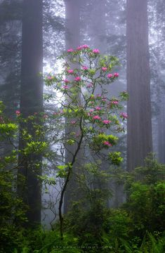 flowering tree in forest Beautiful World, Beautiful Images, Beautiful Flowers, Landscape Photography, Nature Photography, Photography Magazine, Softbox Photography, Better Photography, Photography Books