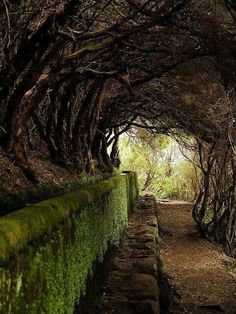 How do I want to walk through this tree tunnel and be met by some magical creature, of the fairy tale variety, at the end.Tree Tunnel, Maderia, Portugal by Dan Knowle Tree Tunnel, Beautiful Places, Beautiful Pictures, The Secret Garden, Secret Gardens, Pathways, Belle Photo, The Great Outdoors, Scenery