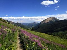Flowers on Trail 401, Crested Butte, Colorado.
