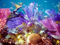 beautiful bahamas