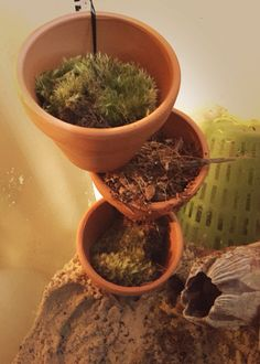 Mini planters filled with moss and coconut fiber. I pour water on them daily to keep up humidity. Good for the crabs to climb on too!  Attached them to a plastic cake dowel wrapped in plastic canvas using plastic string since they each have a hole in the bottom.