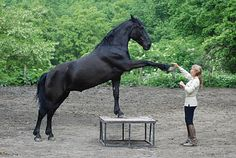 Chianti Trails: Murgese Horses at Gottero Ranch: Italy's Baroque legacy
