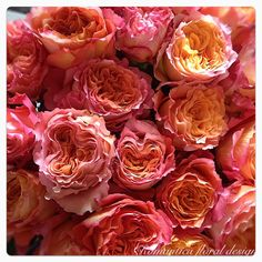 Romantica floral design ~Imported #coral roses ~ Brisbane weddings