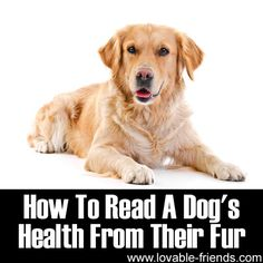 How To Read A Dog's Health From Their Fur