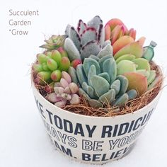:*♡ Succulents (almost looks like an Easter basket for spring)
