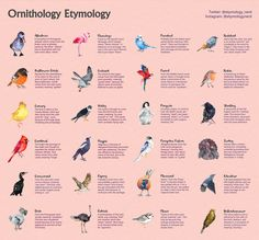Infographics - THE ETYMOLOGY NERD Harvard Students, Old English Words, Common Birds, Self Described, Research Skills, World Languages, How To Create Infographics, Word Of The Day, When Someone