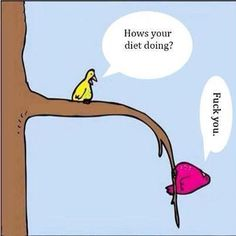 hows the diet going birds - Google Search