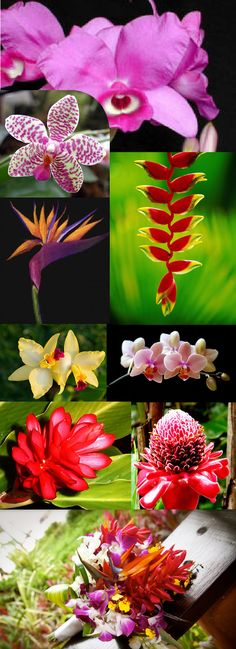 Costa Rican Flowers