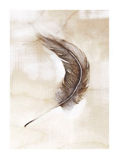 The Urban Nomad: On My Radar: The Haunted Hollow Tree Feather Art Print Feather Drawing, Feather Painting, Feather Art, Bird Feathers, Ruffled Feathers, Wild Horses, Watercolor Art, Birds, Art Prints